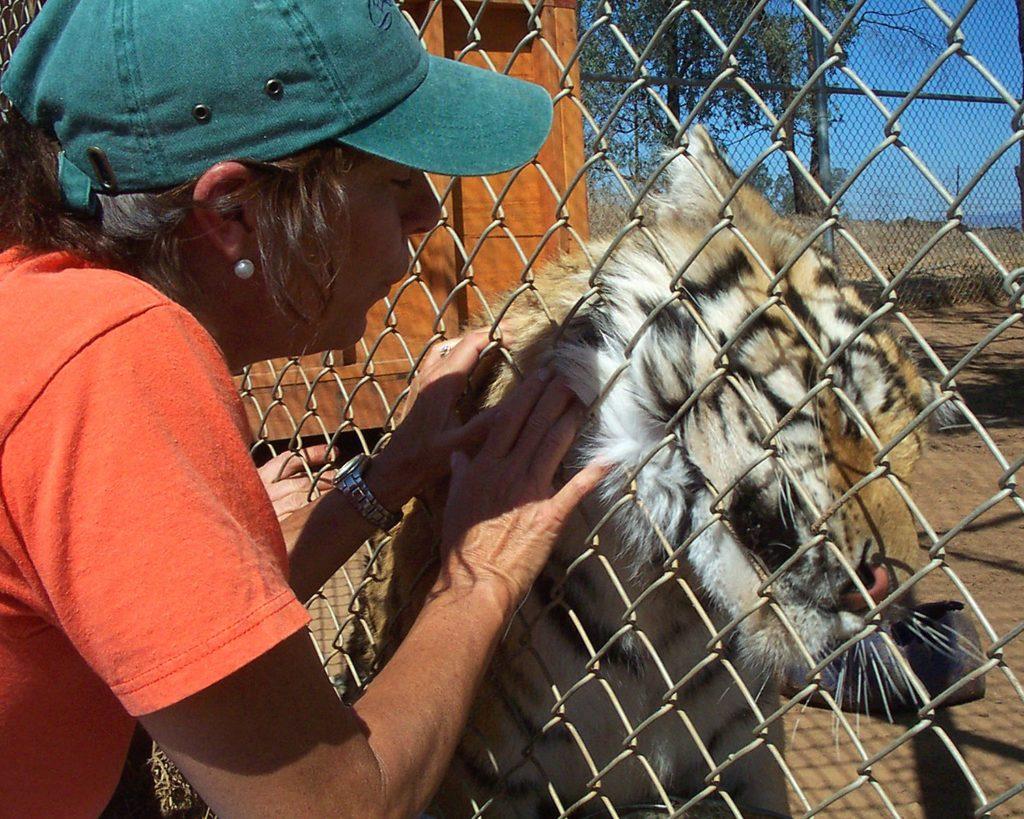 Polly Rodman (Tom Rodman's wife) with a tiger
